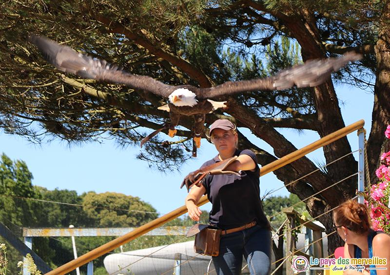 Spectacle oiseaux Aquashow Audierne