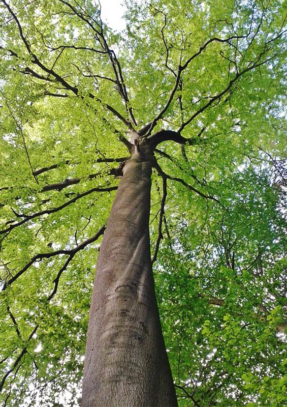arbre vu d'en bas