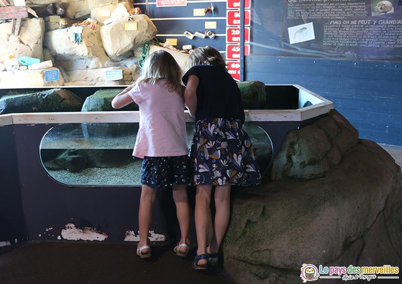 Bassin ludique pour toucher les poissons Aquashow