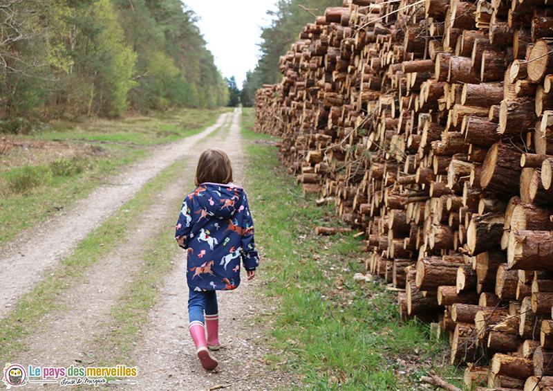 tronc d'arbre dans la forêt de Montfort