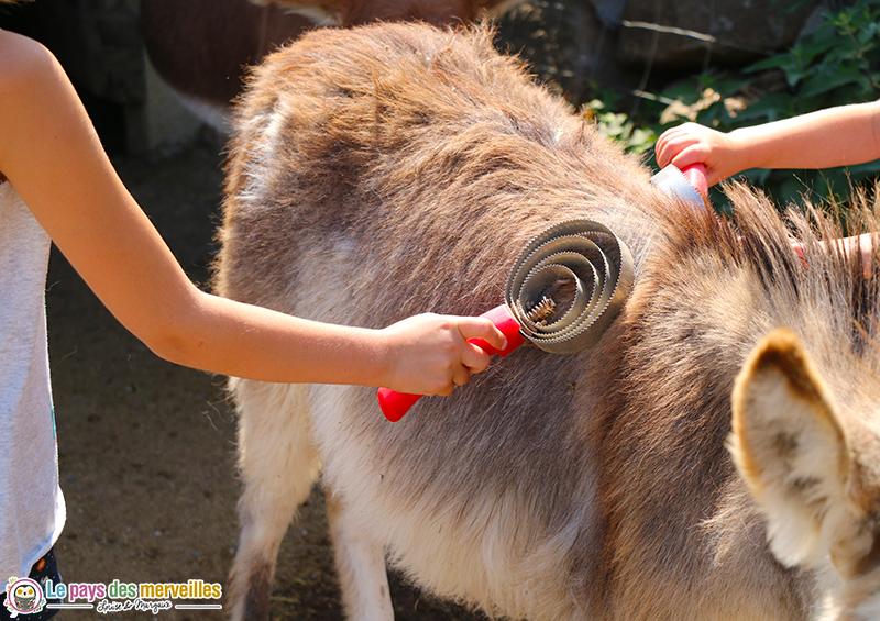 Brosser un âne