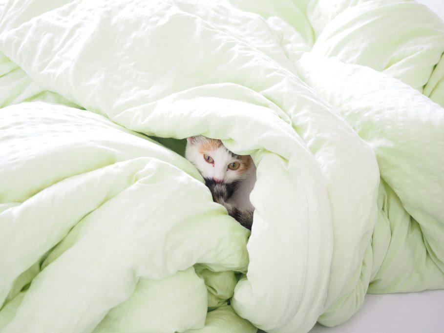 Couette confortable et chaude en duvet