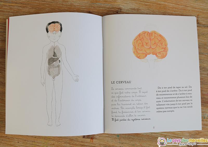fonctions du cerveau