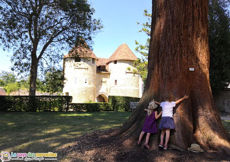 Arbre géant à l'arboretum d'Harcourt