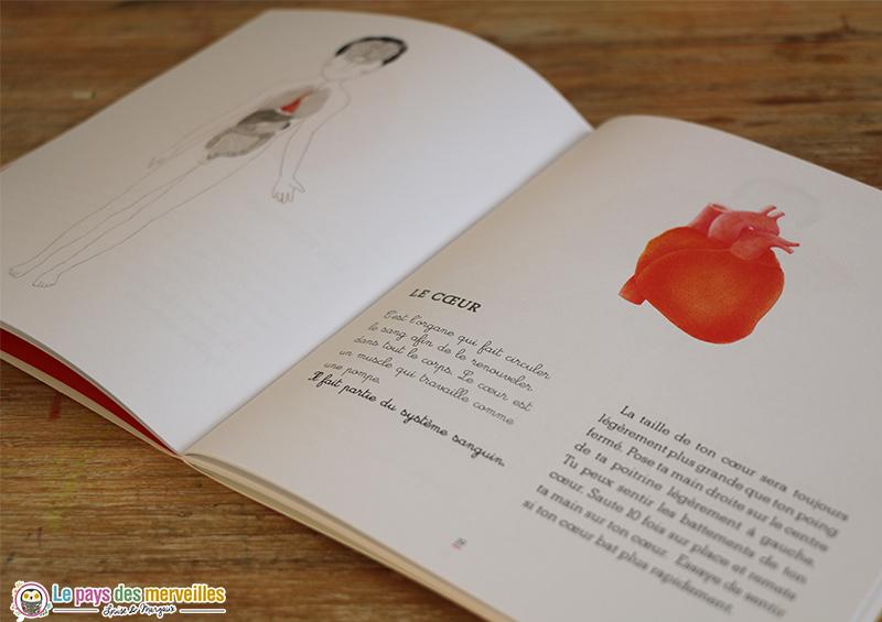 illustration et fonctions du coeur