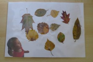 Collage de feuilles d'arbres