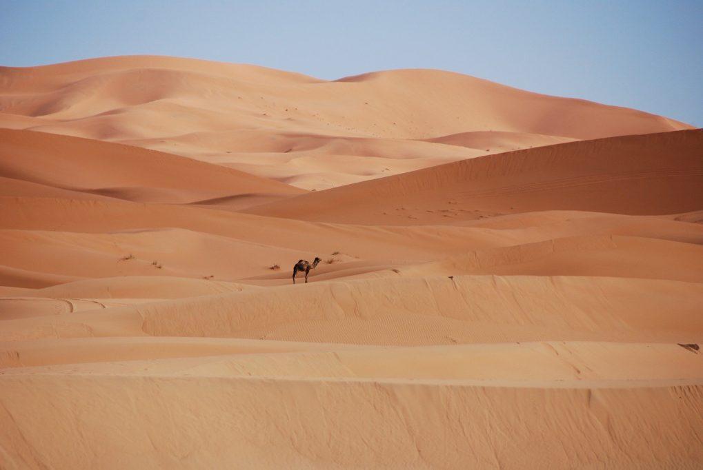 désert maroc dromadaire