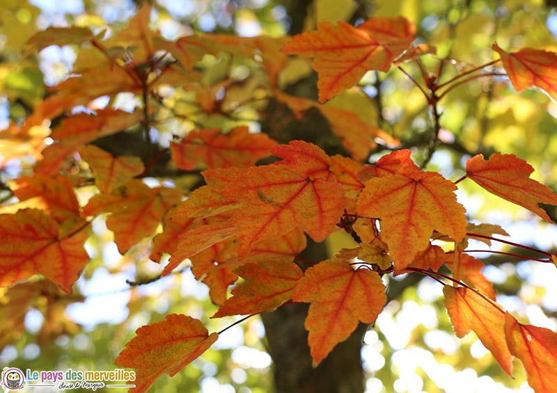 Feuilles d'automne orange
