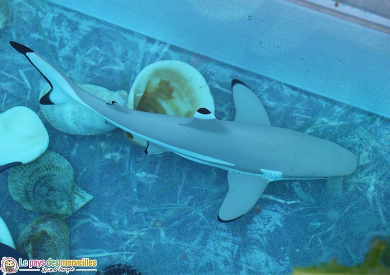 figurine de requin à pointe noire