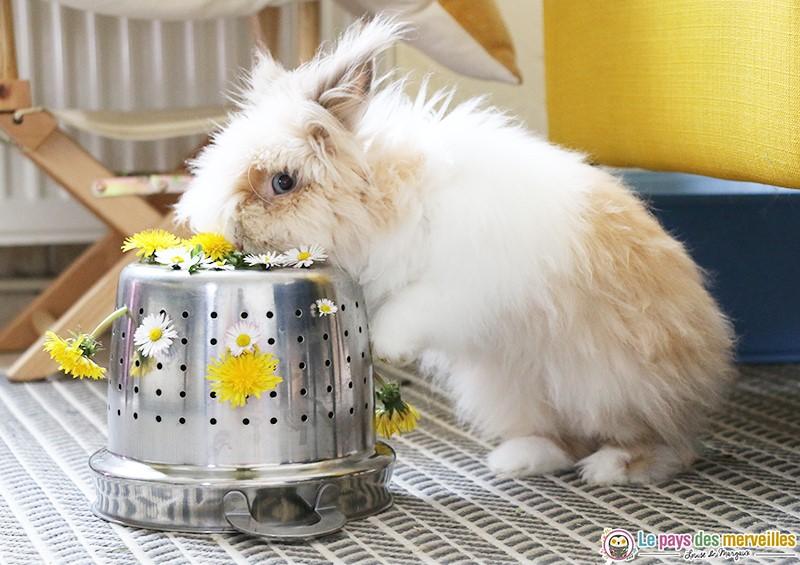 activité de motricité fine avec des fleurs pour le repas du lapin