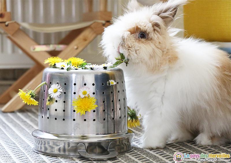lapin qui mange des fleurs