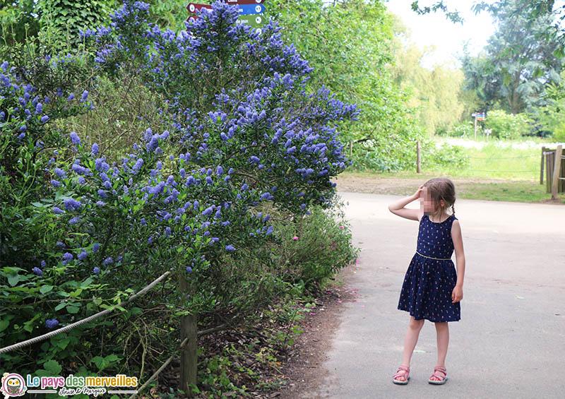 allée fleurie du zoo de Thoiry