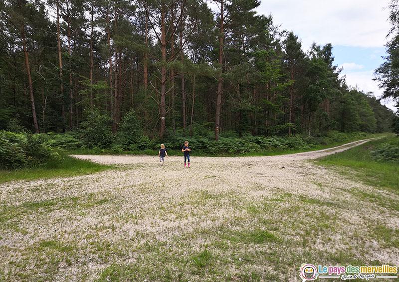 Forêt de Montfort en Normandie