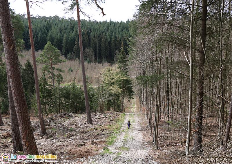 Forêt normande
