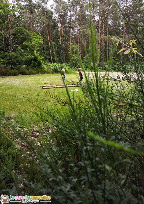 Activité en famille en forêt