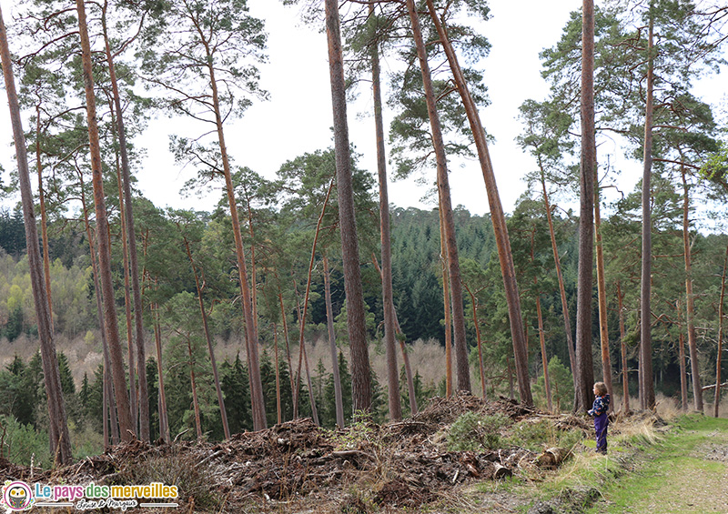 Forêt de Montfort-sur-risle