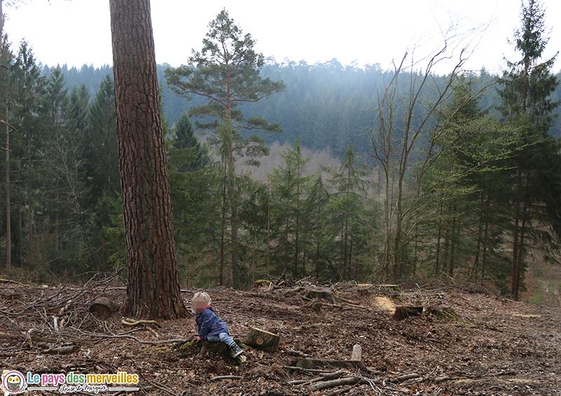 Forêt de Montfort sur Risle