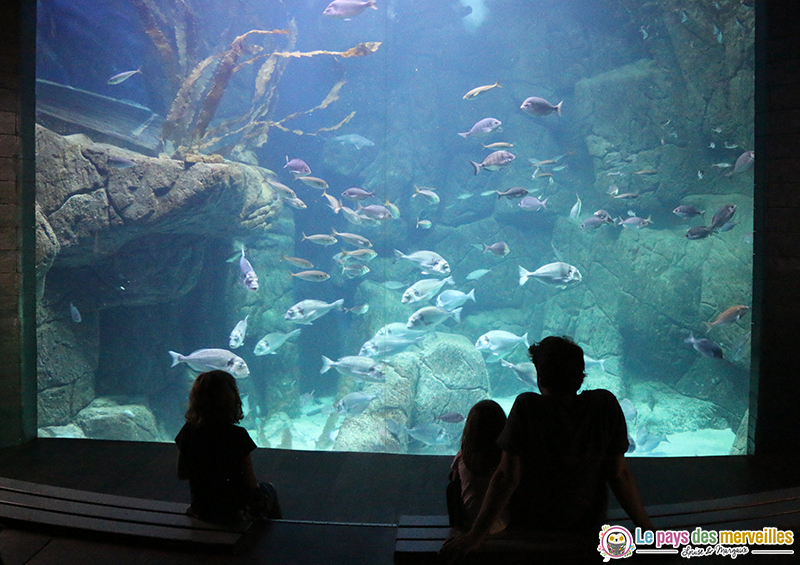 grand aquarium à Audierne