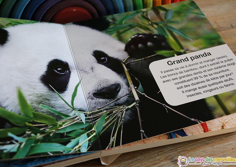Photo du grand panda
