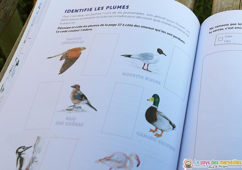 identifier les plumes