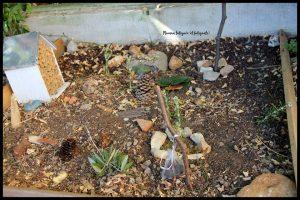 Jardin pour les insectes