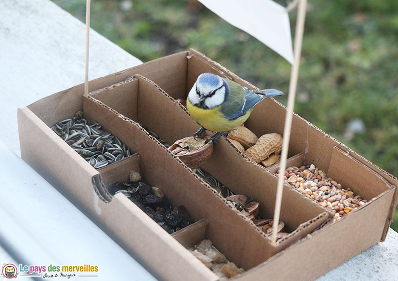 Mésange qui mange des noix