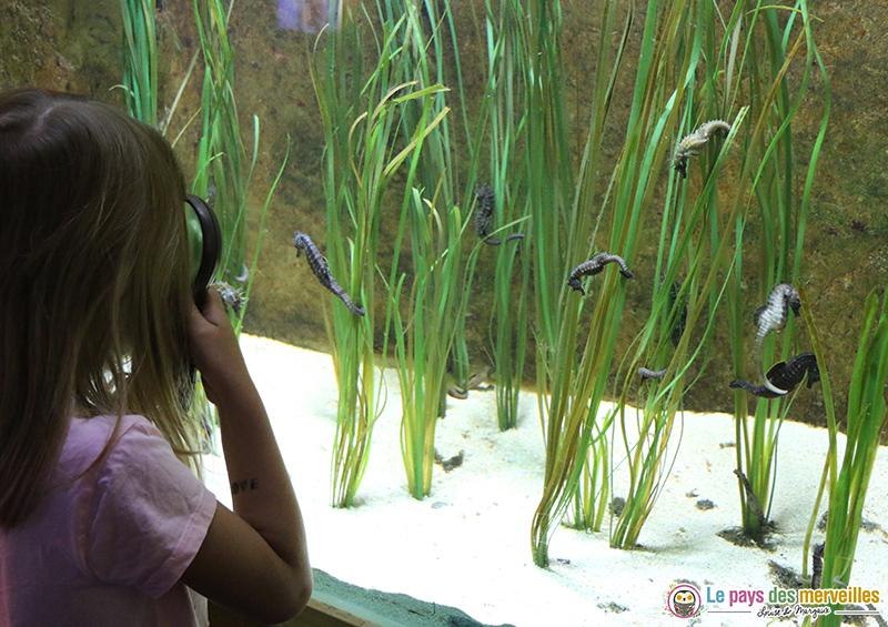 Observation ludique Aquashow