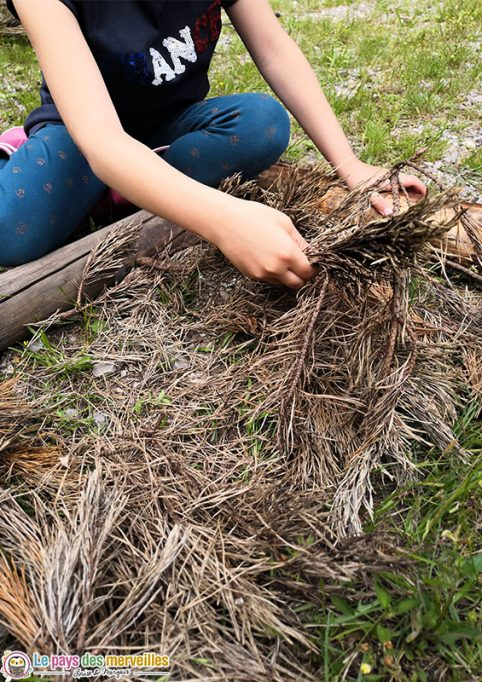 Epine de pin pour parcours sensoriel pieds nus
