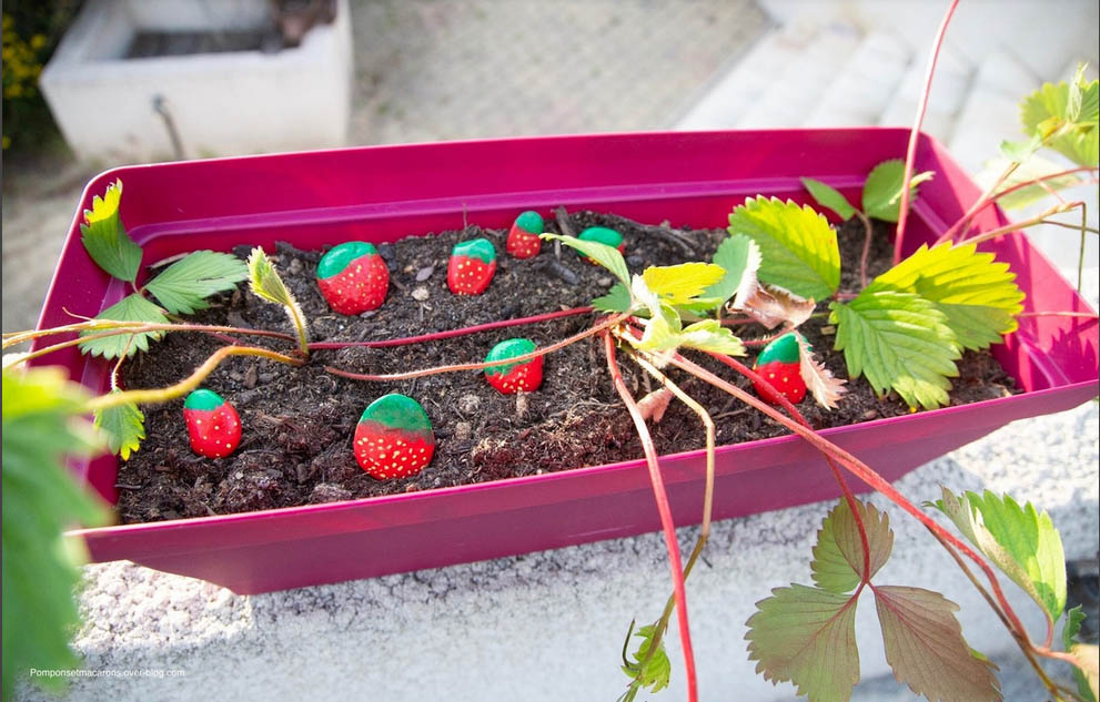 peindre des fraises sur des galets