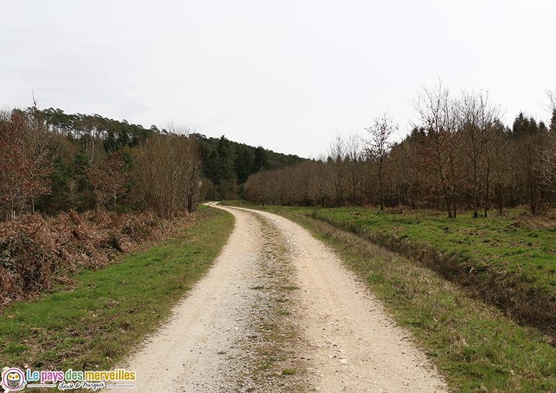 Sentier Montfort-Sur-Risles forêt domaniale