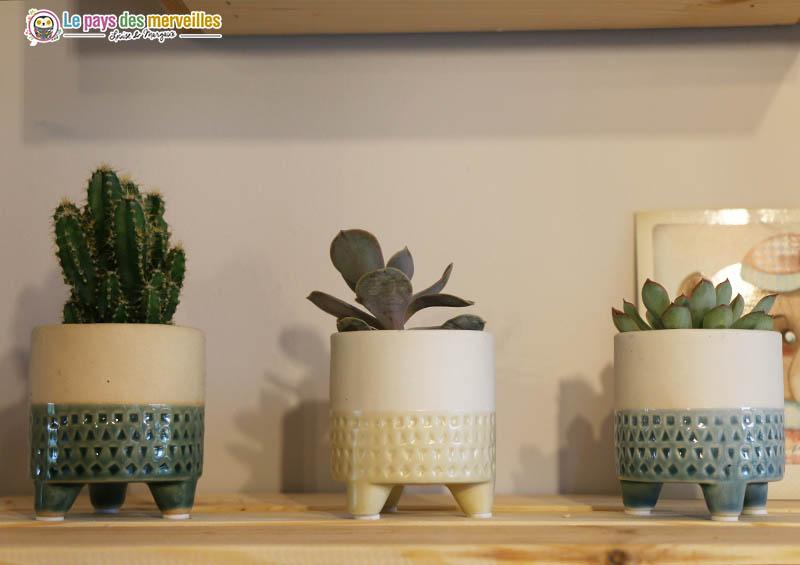 petites succulentes en pot de style scandinave