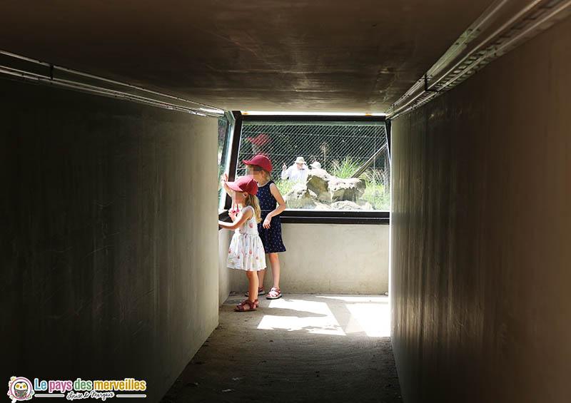 Tunnel de verre des hyènes