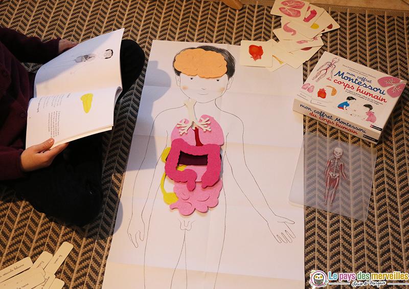 Utilisation du coffret Montessori du corps humain