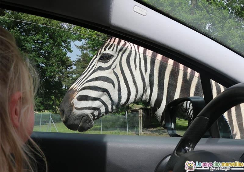 Thoiry safari en voiture
